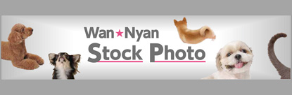 WanNyan Stock Photo